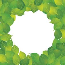 Frame Of The Leaf Stock Images