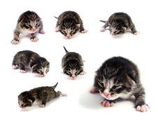 Free Blind Kittens Stock Image - 19213041