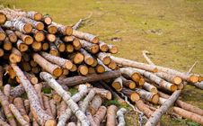 Free Woods On Grass Royalty Free Stock Images - 19213059