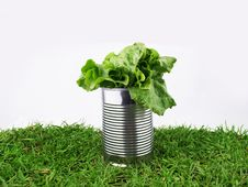 Free Tin With Lettyce Stock Image - 19214001