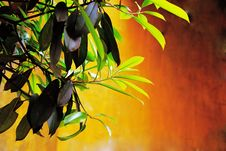 Free Foliage Royalty Free Stock Image - 19215586