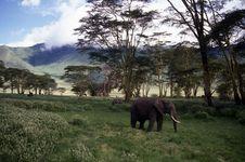 Adult Elephant On The Plain. Stock Image