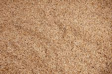 Free High-definition Close-up Of Sesame Royalty Free Stock Photo - 19216145