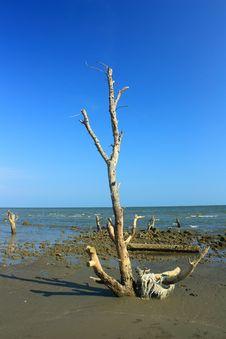 Free Mangrove On Beach Stock Photo - 19217870