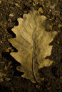 Free Dried Out Autumn Leaf Stock Photos - 19224833