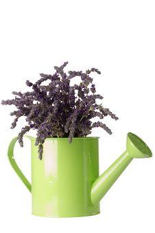 Free Lavender Flower Stock Photo - 19220800