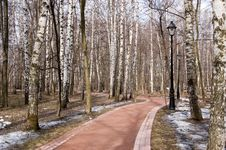 Free Birch Alley In Spring Park Stock Photo - 19221520