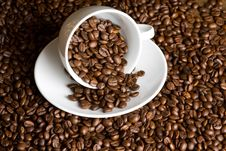 Free Coffee Beans Royalty Free Stock Images - 19221769