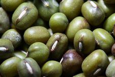 Green Bean Stock Photos