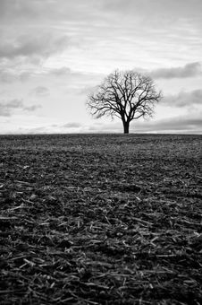 Free Lone Tree In A Field Royalty Free Stock Photo - 19222645