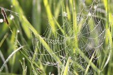 Free Spider On Cobweb Royalty Free Stock Photo - 19223285