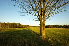 Free Tree In Countryside Stock Image - 19223671