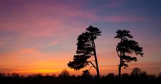 Free Trees Silhouette Against Amazing Sunset Stock Images - 19225404