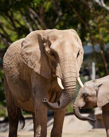 Free African Elephants Royalty Free Stock Image - 19226436