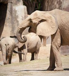 Free African Elephants Royalty Free Stock Image - 19226466