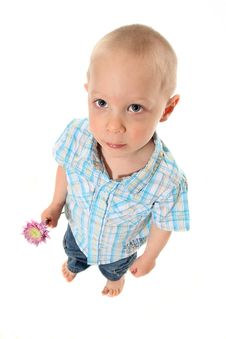 Free Boy Holding Flower Royalty Free Stock Photography - 19226777