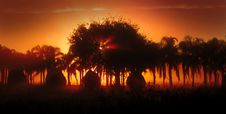 Sunthrough Fog And Palm Trees Royalty Free Stock Image