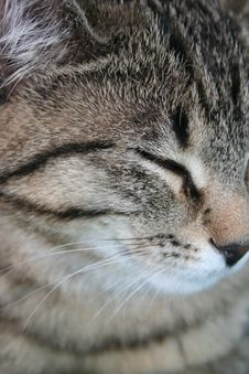 Free Cat Close-up Stock Photography - 19228182