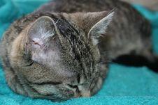 Cat Sleeping Stock Images