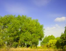Free 2354 Summer Landscape(34).jpg Stock Image - 19228711
