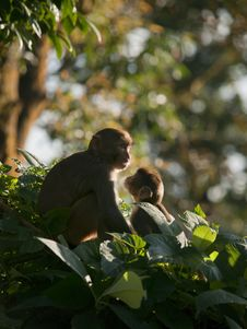 Free A Macaque Family Showing Affection For Eachother Stock Image - 19229921
