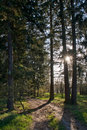 Free Sunset In The Forest Stock Photos - 19231583