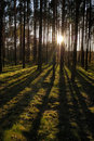 Free Sunset In The Forest Royalty Free Stock Photography - 19231597