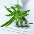 Free Rosemary On Fork Royalty Free Stock Images - 19235769