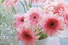 Free Pink Daisy Royalty Free Stock Photos - 19231308