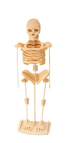 Free Wooden Model Of The Skeleton Royalty Free Stock Photo - 19233245