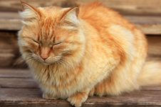 Free Cat Sleeping Royalty Free Stock Images - 19233859