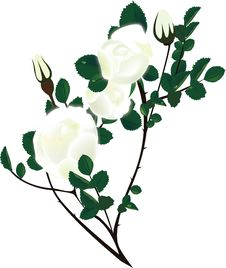 Free Illustration Rosehip Branches With White Flower Stock Images - 19237404