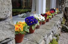 Free Flower Pots Royalty Free Stock Images - 19239929