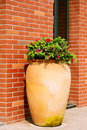 Free Ceramics Flowerpots Stock Images - 19240714