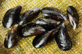 Free Fresh Mussel Stock Photography - 19244362