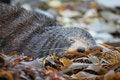 Free Sleeping Wild Seal Stock Photos - 19244553