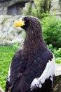 Free Eagle Stock Photography - 19245772