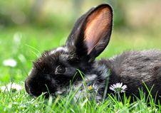 Free Rabbit Stock Images - 19241194