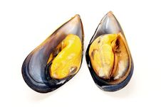 Free Fresh Mussel Stock Photography - 19242322
