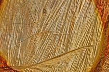 Free Wood Background Stock Photography - 19243672