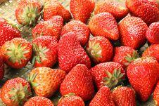 Free Strawberry Stock Photography - 19244412