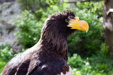 Free Eagle Stock Image - 19245741
