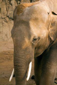 Free Elephant Royalty Free Stock Image - 19246856