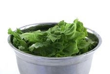 Free Lettuce Stock Photography - 19249832
