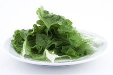 Free Lettuce Royalty Free Stock Photography - 19249897