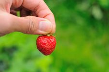 Free Single Red Strawberry Stock Images - 19251494