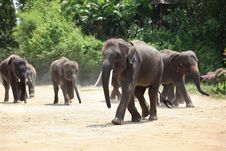 Free Elephant Herd Stock Photo - 19251860