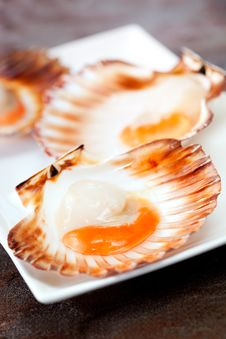 Free Scallops Stock Image - 19252011