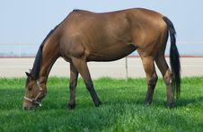 Free Horse Grazing Stock Photography - 19252192