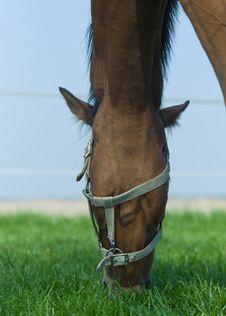 Free Horse Grazing Royalty Free Stock Photos - 19252198
